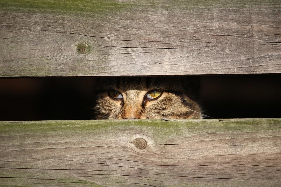 cat-1184978_960_720